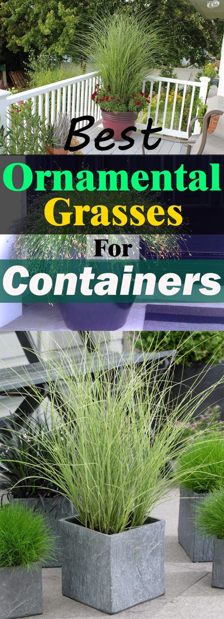 Best Ornamental Grasses for Containers and How to Grow them -   18 plants Outdoor grasses ideas