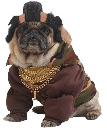 Pity the Fool Pet Costume---The Top Pet Costumes for #Halloween http://poshonabudget.com/2014/09/the-top-pet-costumes-for-halloween.html via @poshonabudget