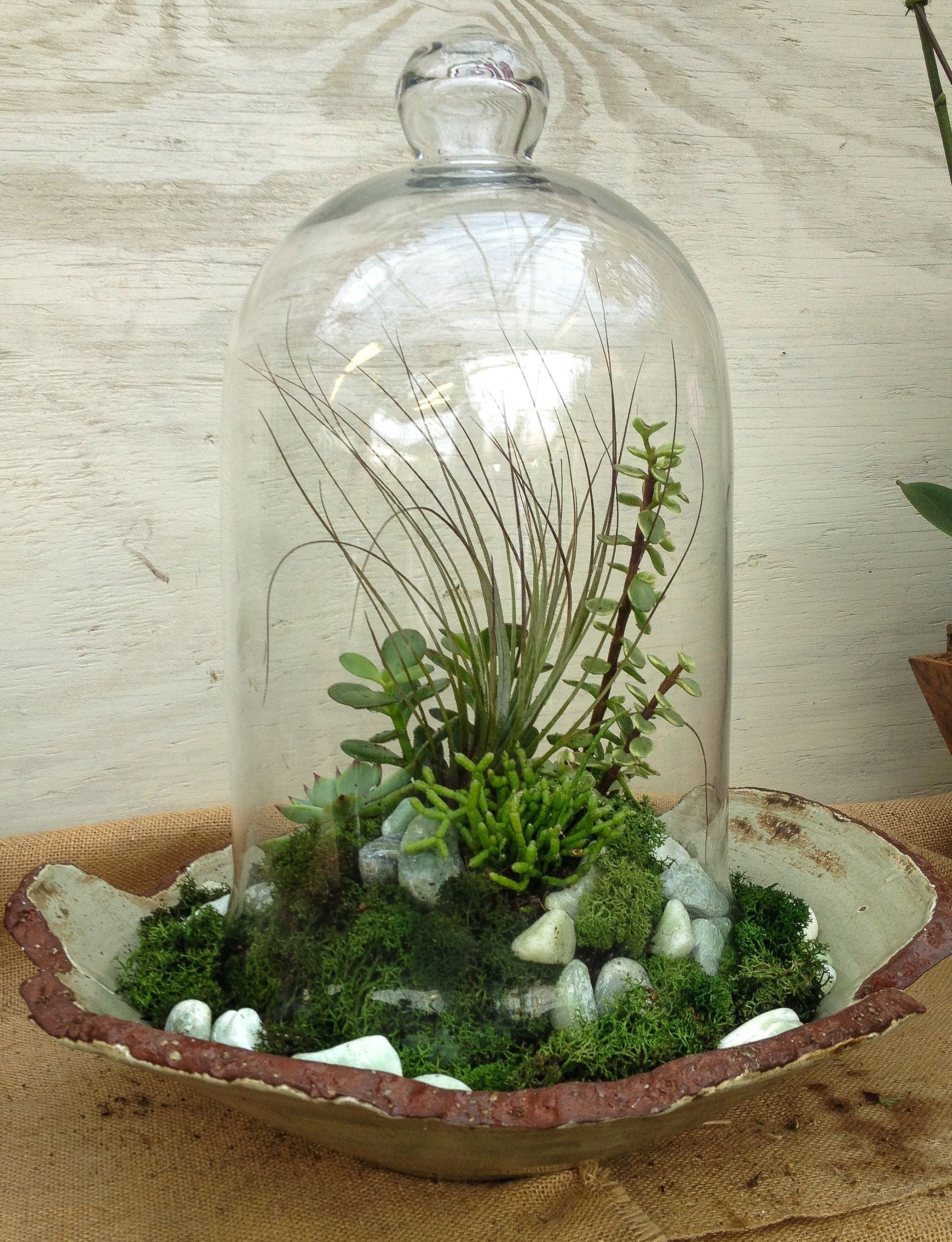 Bad Deko Pflanzen Image Result For Succulent Cloche Bad Jardinería