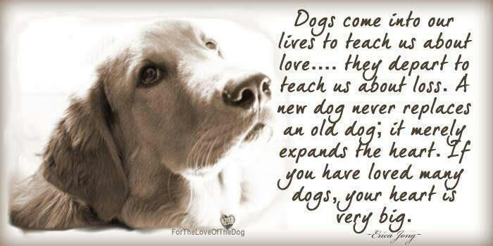 Pin By Dawn Kalybaba On Rum Drink Dogs Dog Quotes Pets Beauteous Dog Loss Quotes