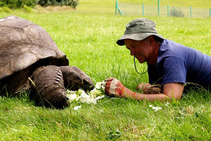 182-year-old-tortoise-jonathan-6