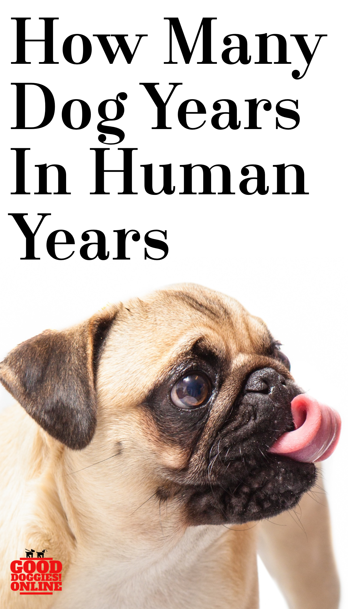 How Many Dog Years In Human Years? Dog years, Dog ages, Dogs