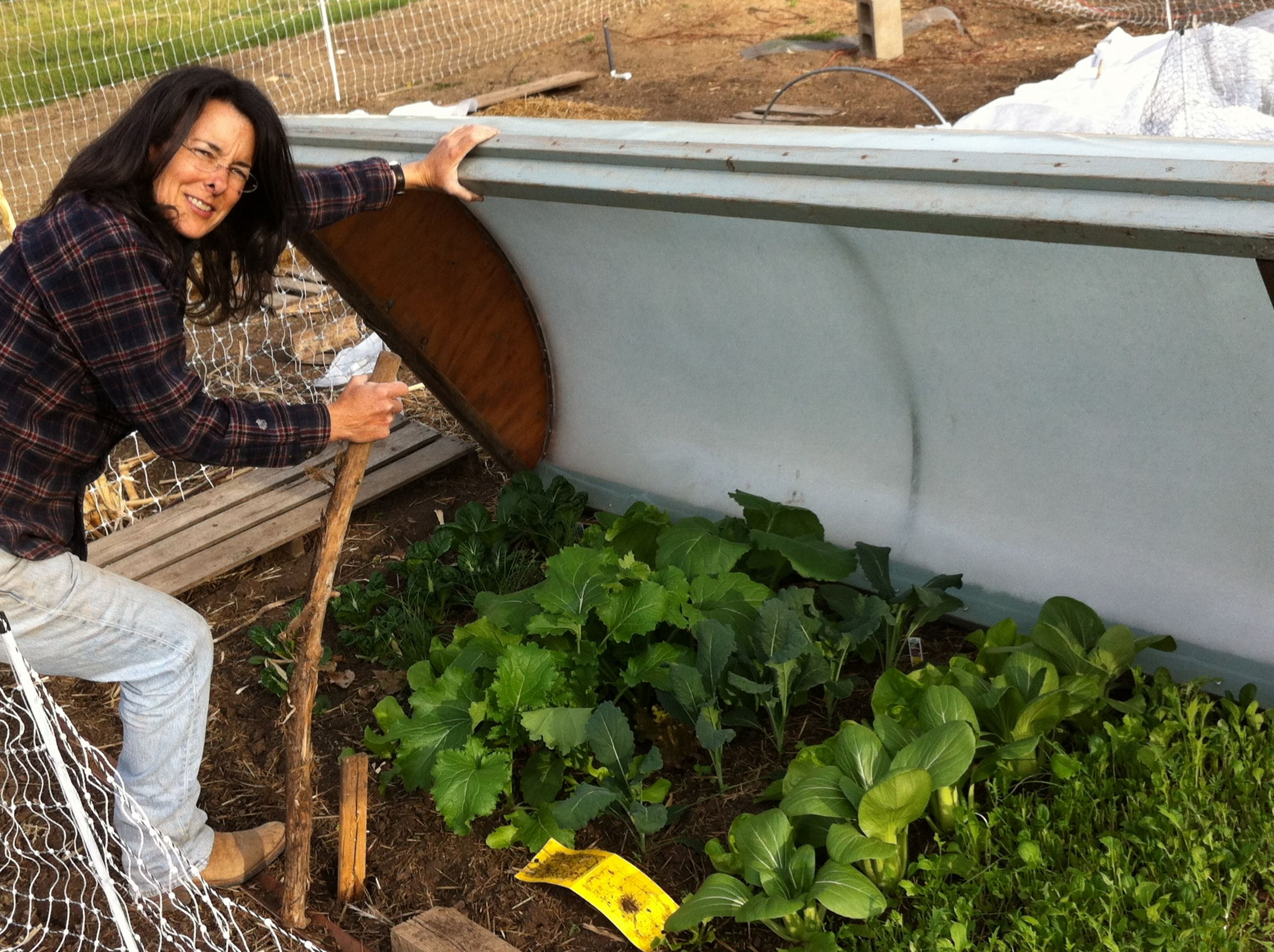 Best Plants For Homegrown Salads Food Garden Veggie Garden 640 x 480