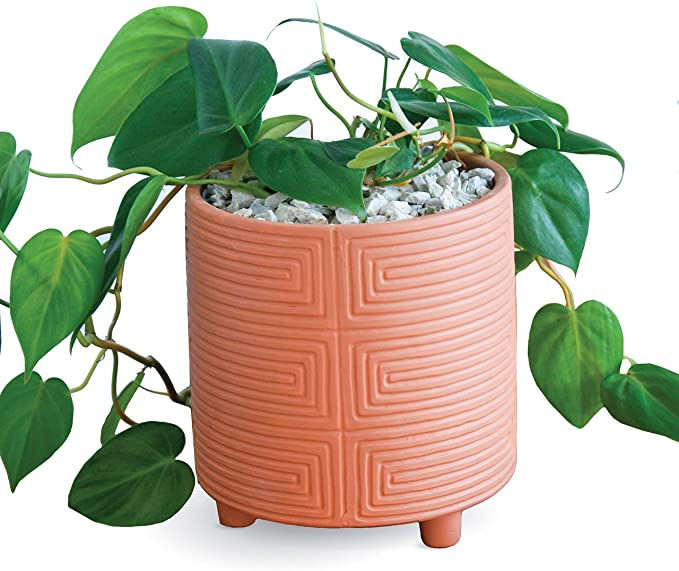 Amazon Com Carlton Lane Terracotta Pot Look 6 Inch Clay Plant Pot With Drainage Holes In Terra Cotta Style In 2020 Design Succulents Clay Plant Pots Terracotta Pots