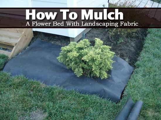 Discover The Pros And Cons Of Using Landscape Fabric Landscape