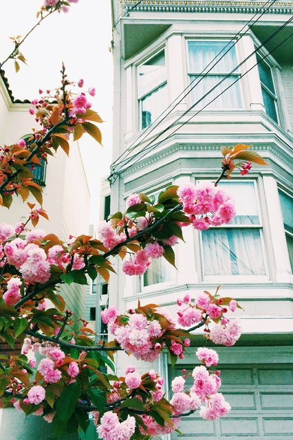 """San Francisco - Noe Valley""""Every spring, the cherry blossoms come out all over the city, and Noe Valley seems especially full of them. When I saw these against the green house, I thought it might make for a really pretty picture."""""""