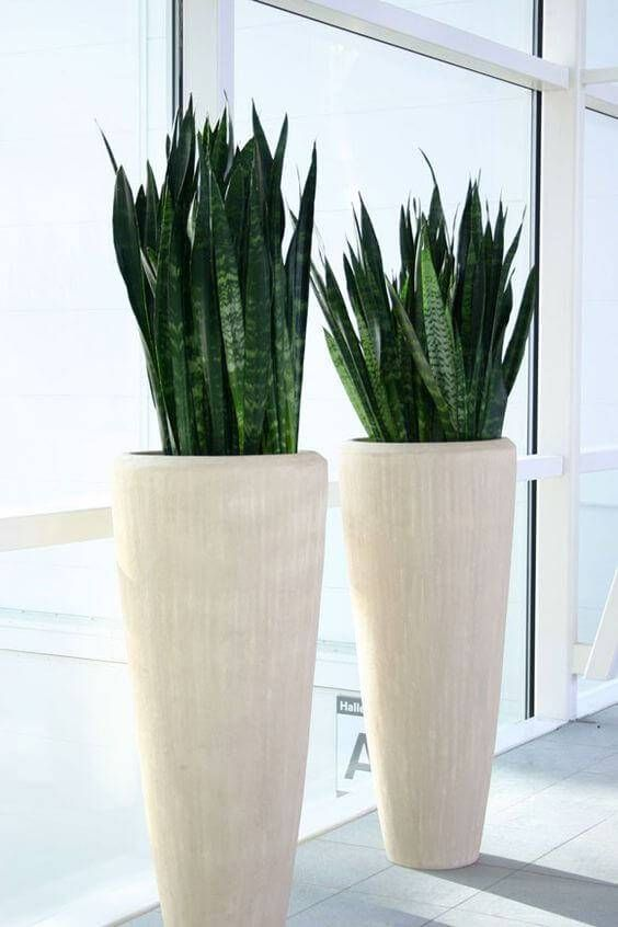espada de sao jorge vasos altos Casa decorar Pinterest Vasos - decorar jarrones altos