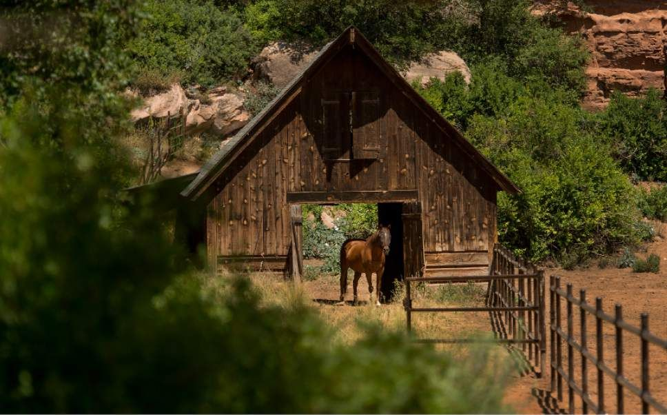 10++ South utah valley animal shelter ideas