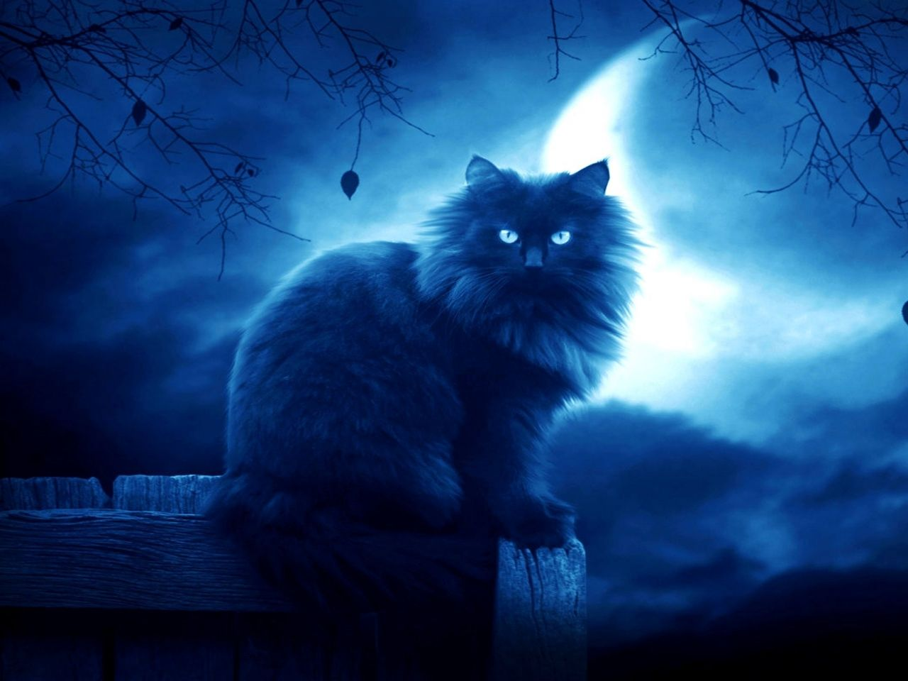 Wallpaper 1280x960 Cat Black Moon Night Silhouette Outlines