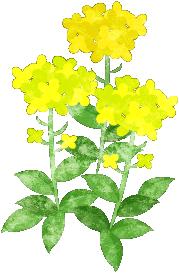 菜の花のイラスト In 2019 My Oridinal Illustrations 菜の花