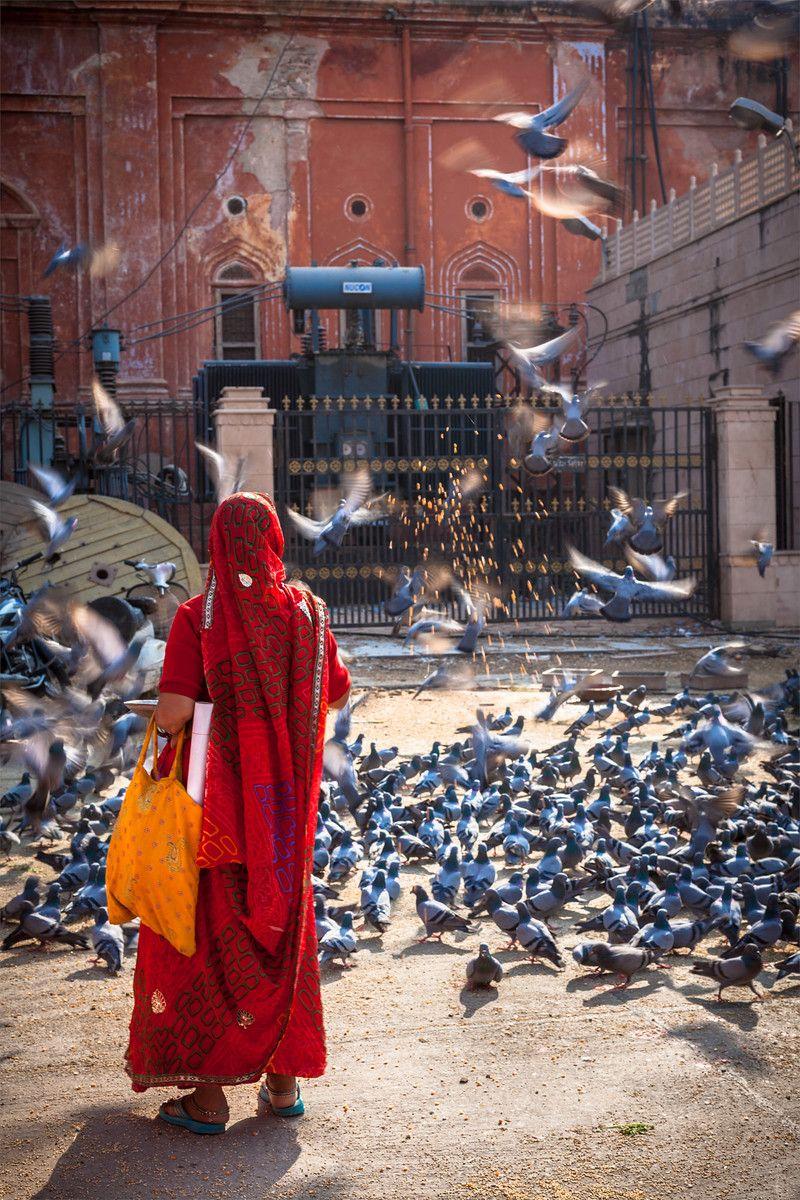Woman feeding pigeons in the street. Jaipur, Rajasthan state, India