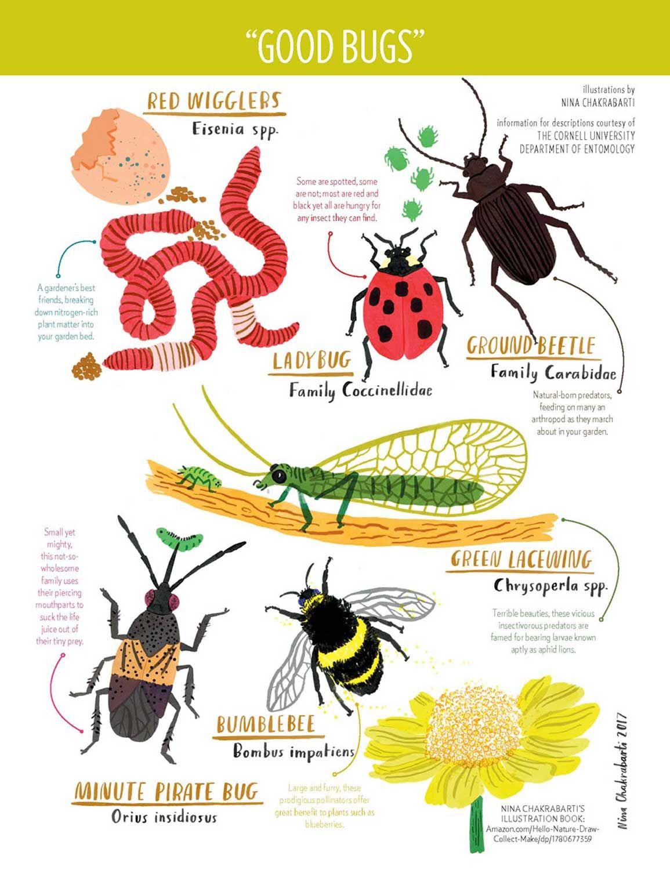 Good Bugs Vs Bad Bugs Bad Bugs Bug Hotel Bugs