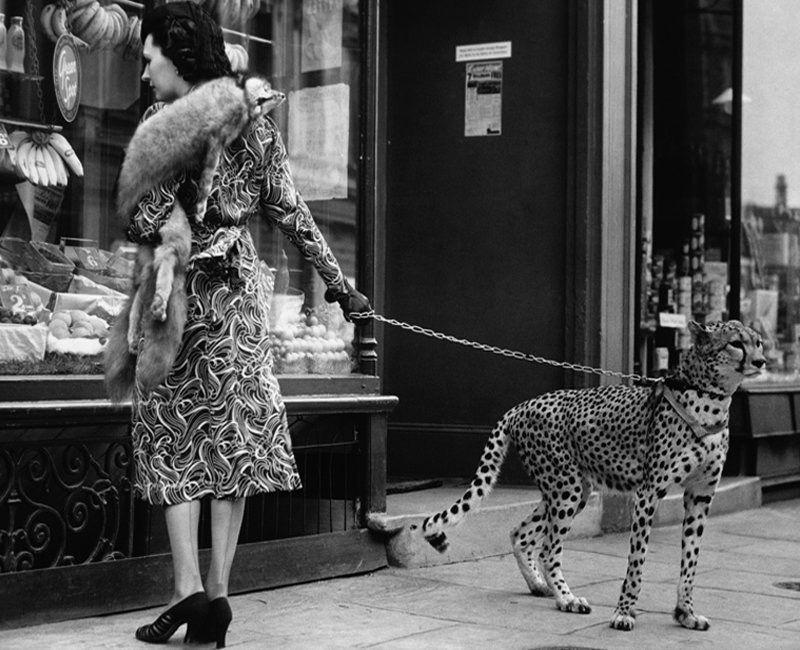 Josephine Baker & Pet Cheetah, 1930s Weird vintage