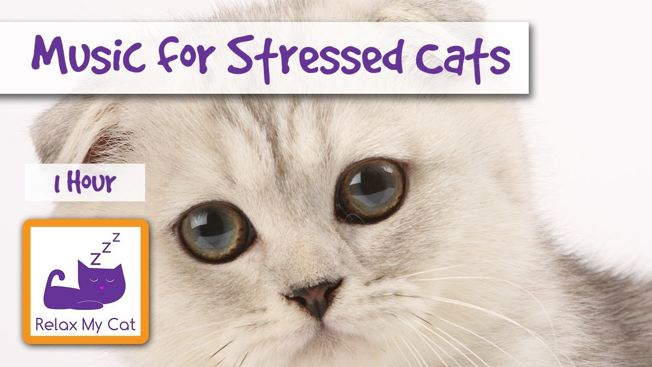 1 Hour Of Cat Music For Stressed Cats And Kittens Stress09 Kat Gedrag Katten Vuurwerk