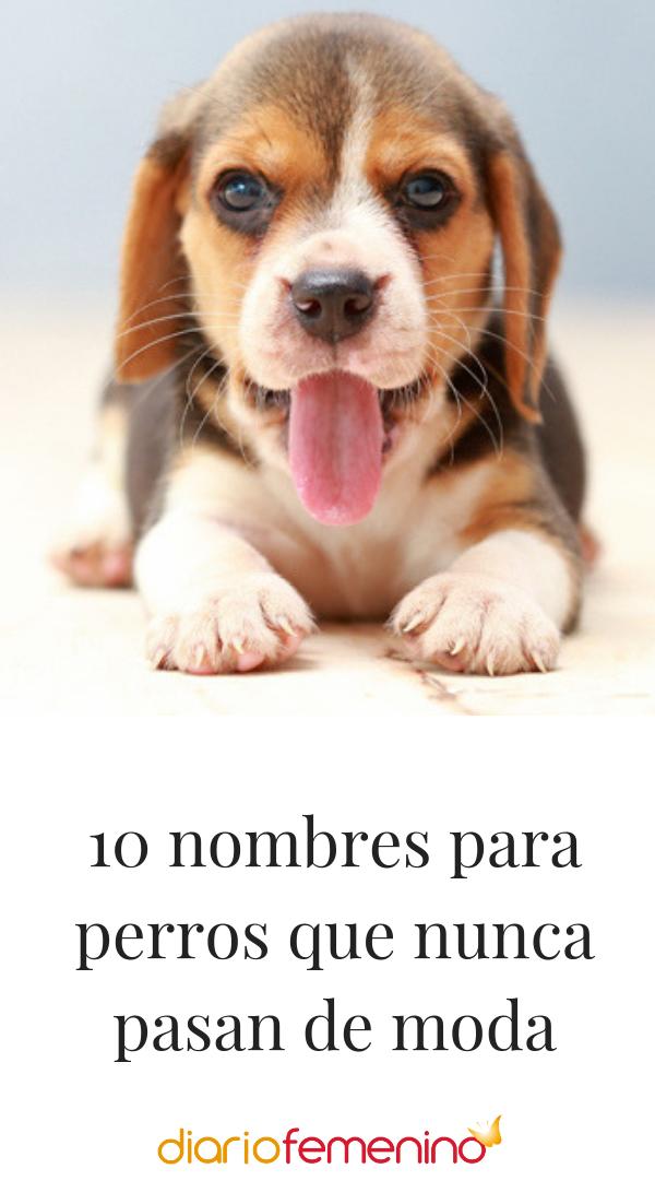 13 Ideas De Perritos Lobos Zorros Perros Bonitos Perros Perros Lindos