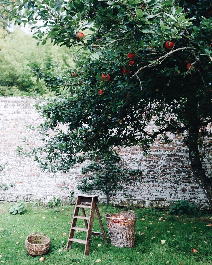 Www Eppinggardener Com Apple Tree Apple Tree Gardening Garden Trees