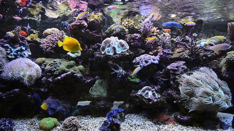 Aquarium Screensaver And Hd Video Living Coral And Exotic Fish