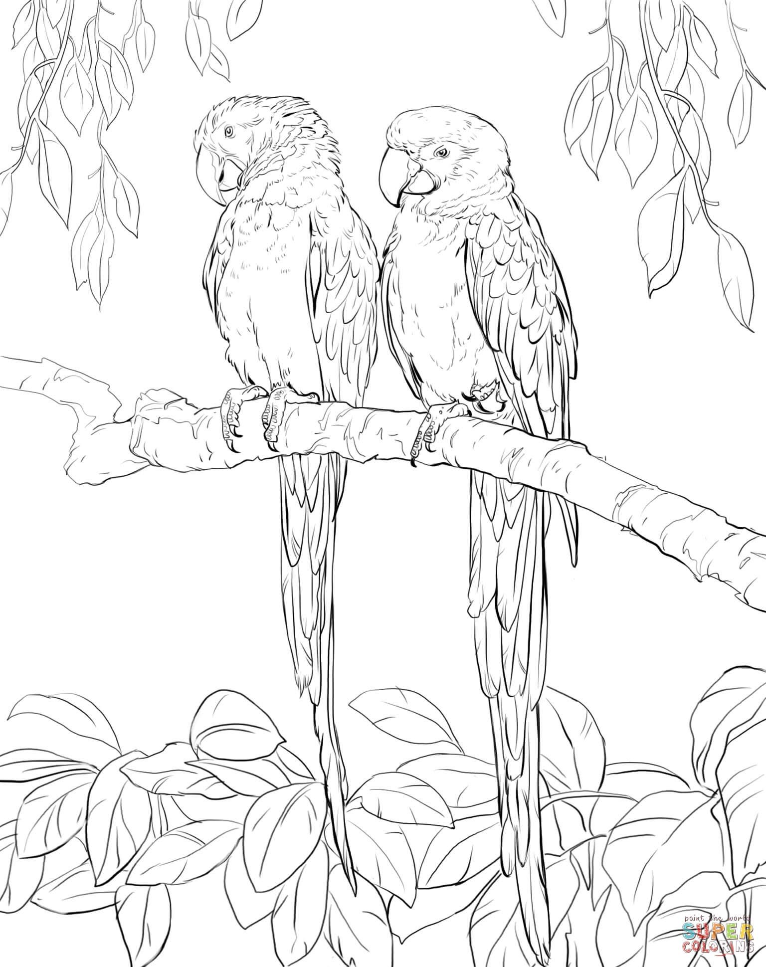 Two Scarlet Macaws Super Coloring pyrography Pinterest