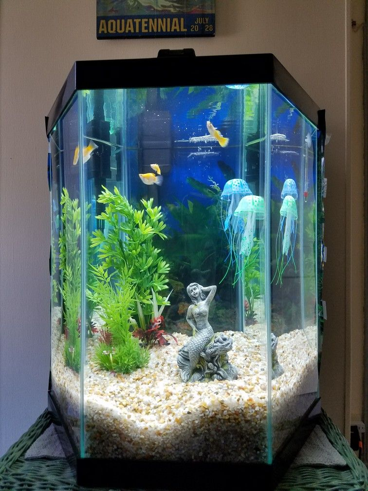 Week2 New Tank By Elsa 20 Gallons Hexagon From Petsmart Fish Tank Aquarium Design Hexagon Fish Tank