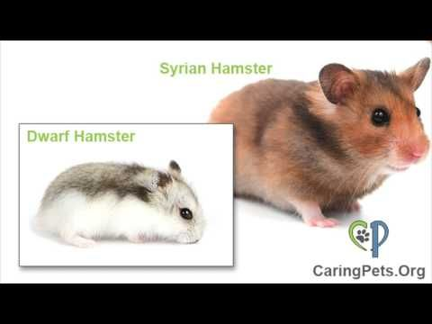 Best Hamster Bedding The Ultimate Guide For Syrian Robo Dwarf Hamsters 2020 Hamster Bedding Dwarf Hamster Robo Dwarf Hamsters