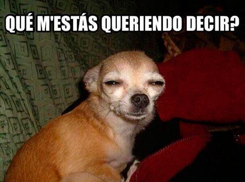 Que Me Estas Queriendo Decir Jpg 480 357 Funny Spanish Memes New Memes Spanish Memes