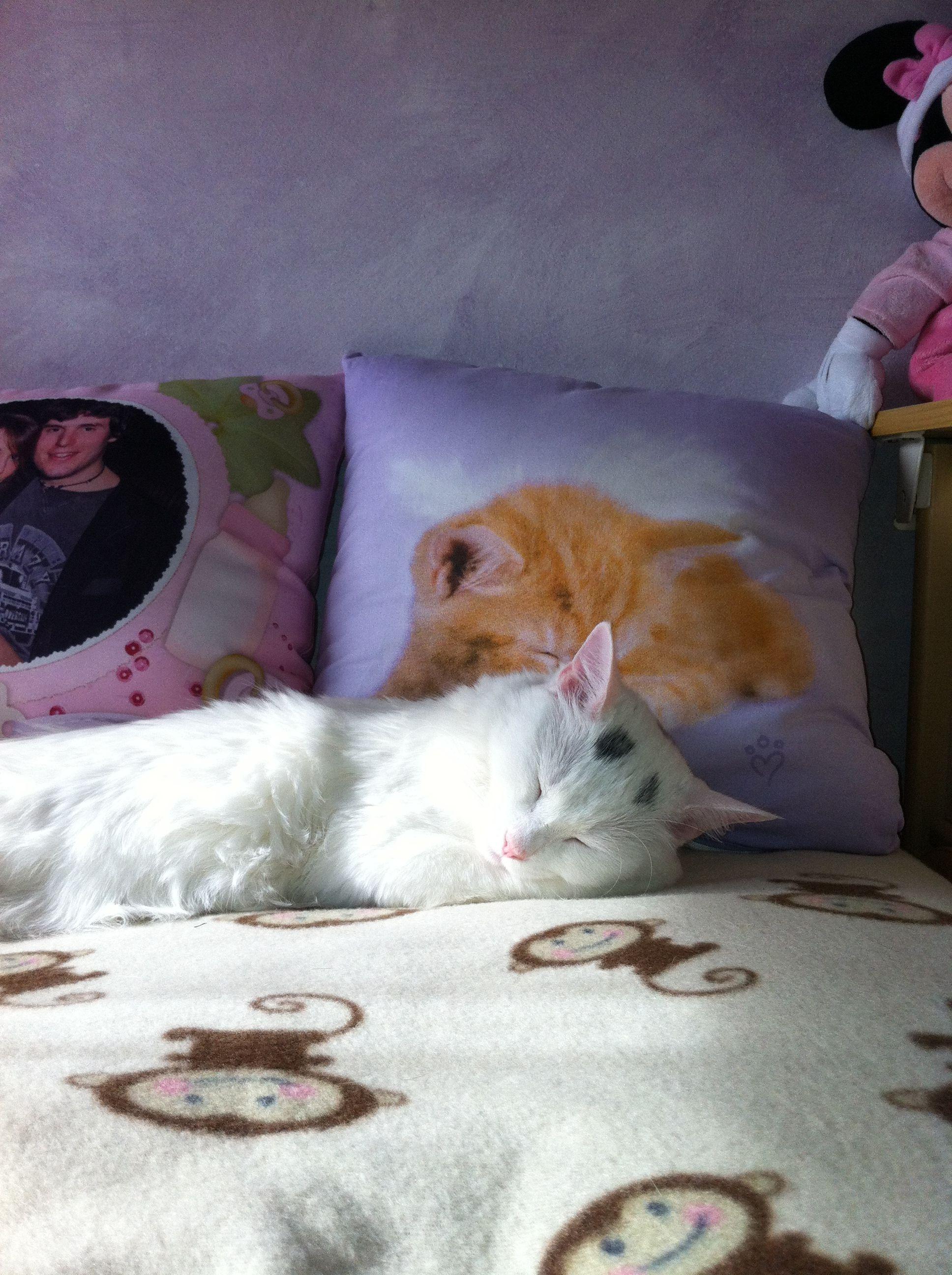 Sleeping.....#cat #sweetdream #bed