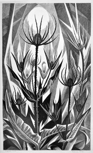 Teasels, wood engraving - Monica Poole (1921-2003)