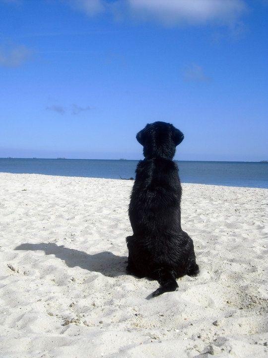 Photo of Black Labradors 💖