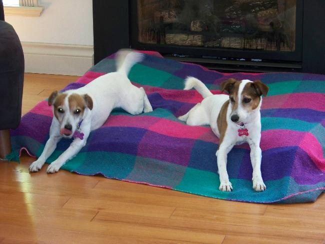 Beautiful Island Home And Goofy Pets Housesitter Dogsitters