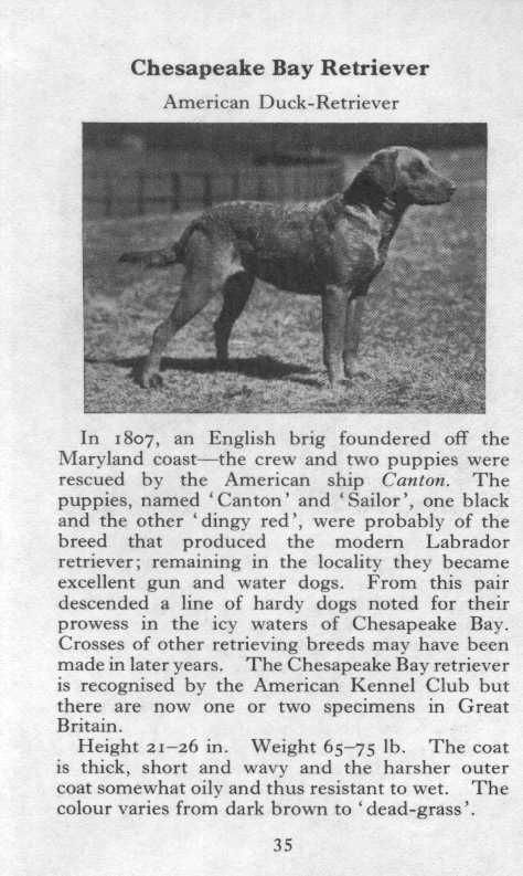Cbr Maryland State Dog Heidi She Was The Best Dog Ever And