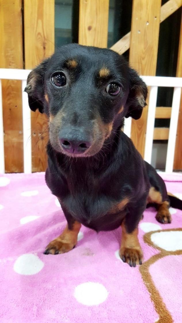 Adopt Hi On Adoption Dogs Beautiful Dogs