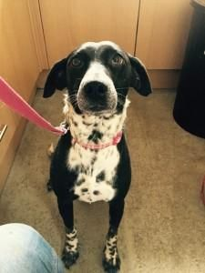 Yaz Is A Very Shy Sweet Girl Who Needs A Quiet Patient Home For Sale In Doncaster South Yorkshire Preloved Sweet Girls Dogs And Puppies Dogs
