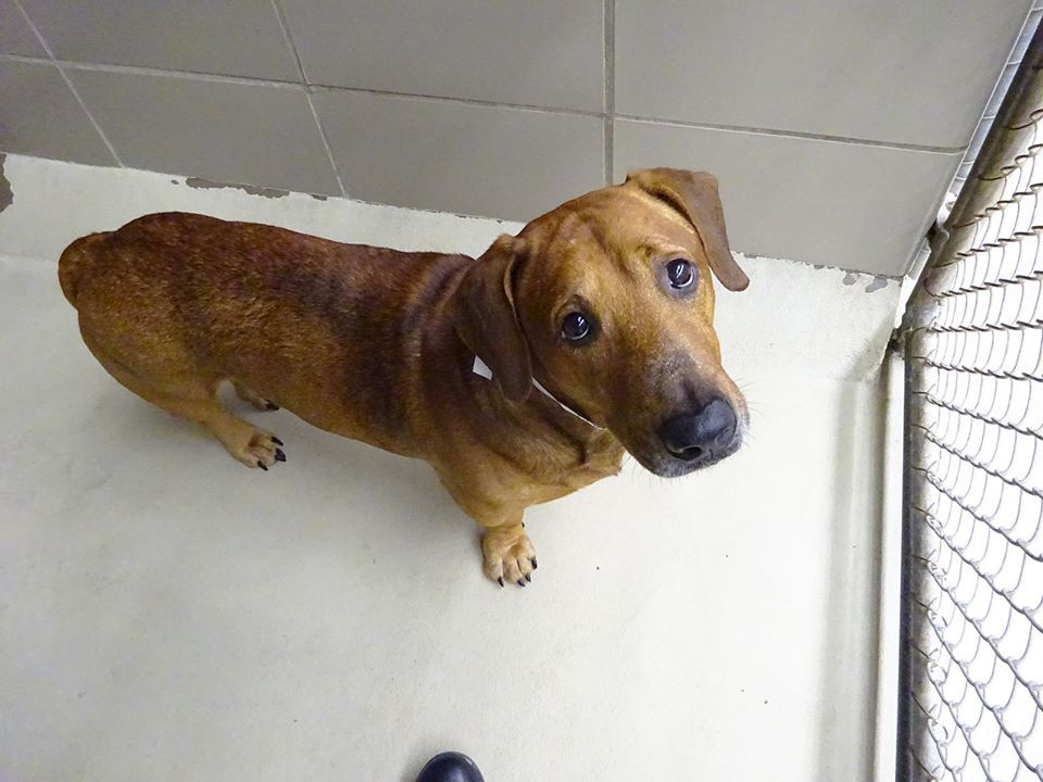 On Medical Assessment Rescue Me Tampa Shelter Dogs Shelter Dogs Dogs Medical