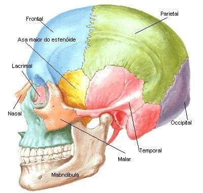 Sobota Anatomia Crânio - Portal de Aulas de Radiologia - raiosxbr ...