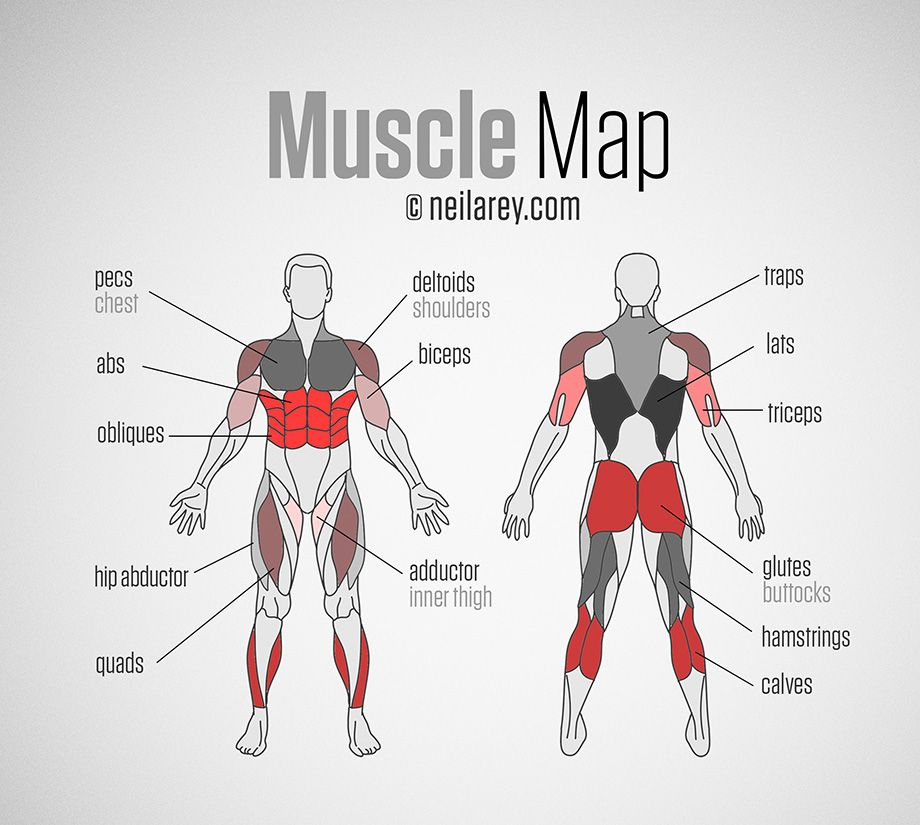 muscle map | body sculpting | pinterest | salute, nutrizione e pesi, Muscles
