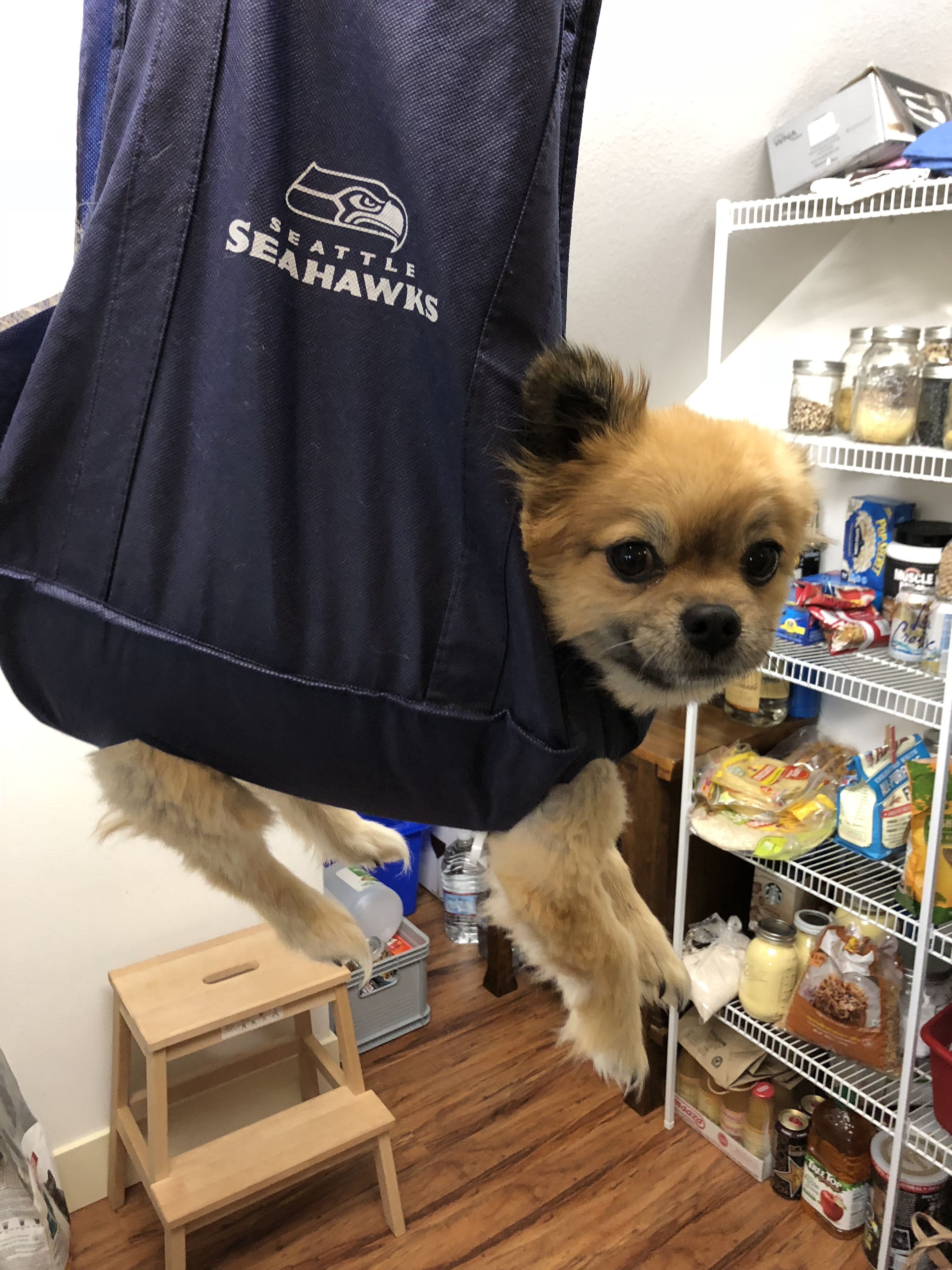 Dog Nail Trim Hack Made This Out Of A Fabric Grocery Bag My Pup