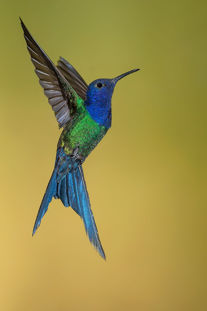 Comunidad Argentina De Fot 243 Grafos De Naturaleza Colorful Birds Beautiful Birds