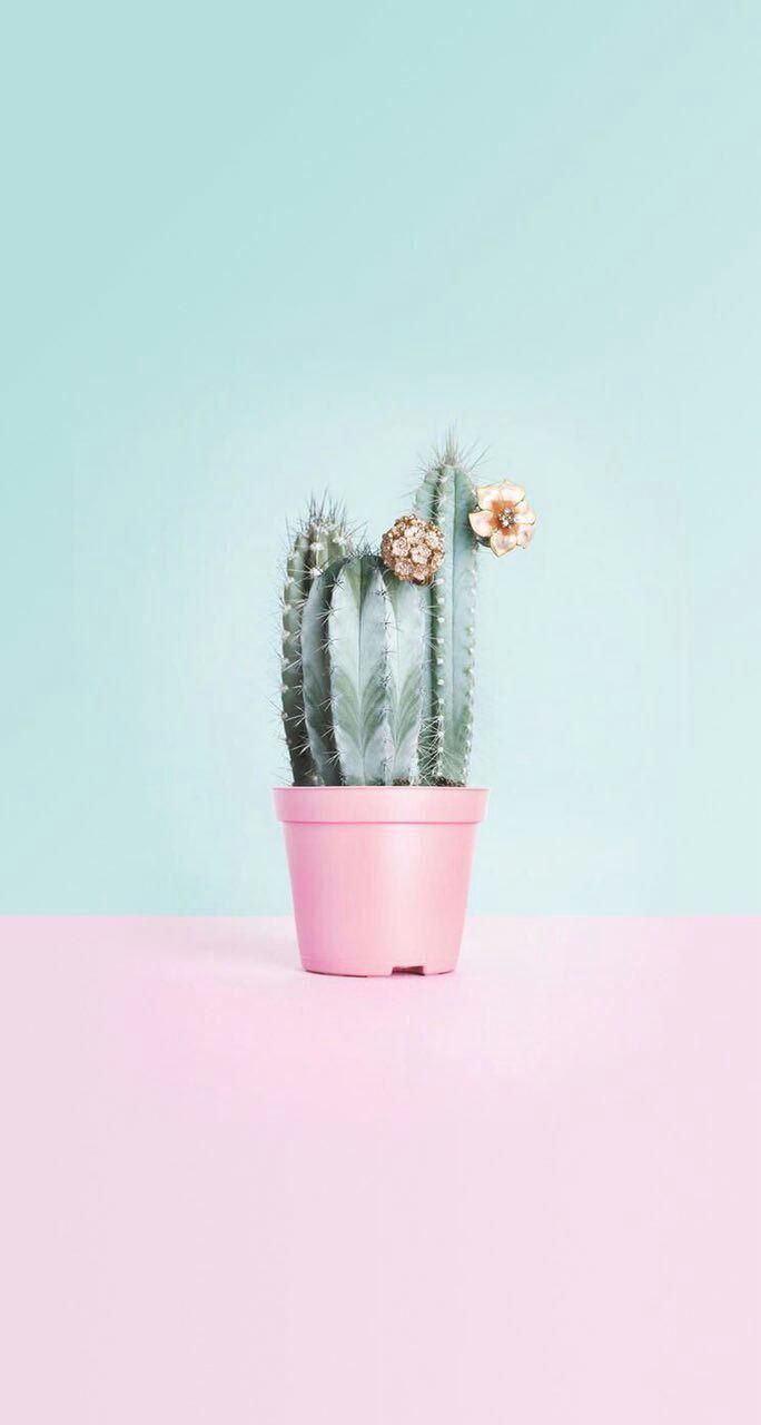 Pin oleh Anna S. di Photo ofoq   Kaktus, Lukisan bunga, Kertas dinding