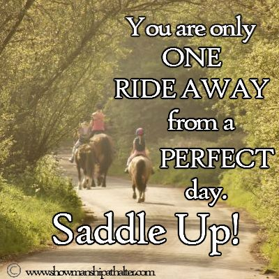 Saddle Up!  #horse  http://www.showmanshipathalter.com