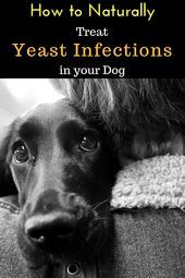 How to Naturally Treat Yeast Infections in Dogs #yeastinfections