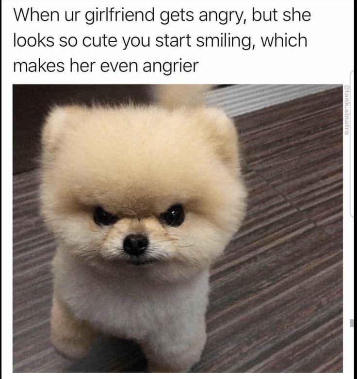 42 lustige Tier-Meme, die so süß sind, dass du sterben wirst - Memebase - Fun ... - Healthy Skin Care #hilariousanimals