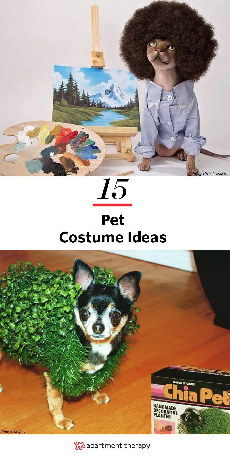 Amazing Dog Cat Halloween Costumes From Instagram Pet