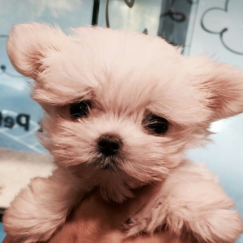 Tao's adorable dog Candy