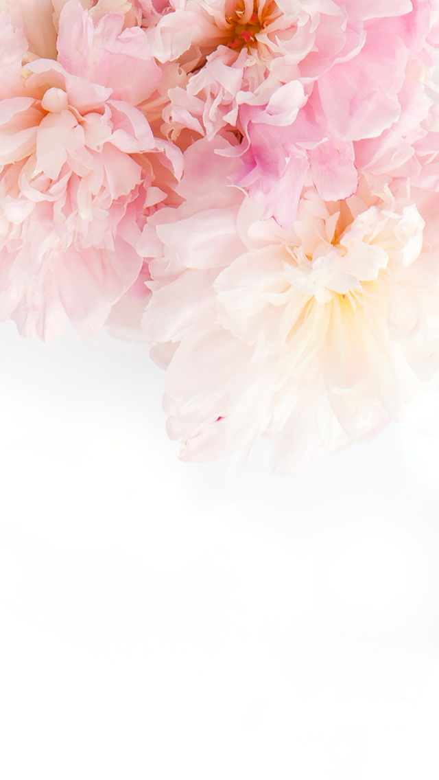 White Wallpaper Iphone Floral Wallpaper Phone Pink Flower Wallpaper Pretty Phone Wallpaper
