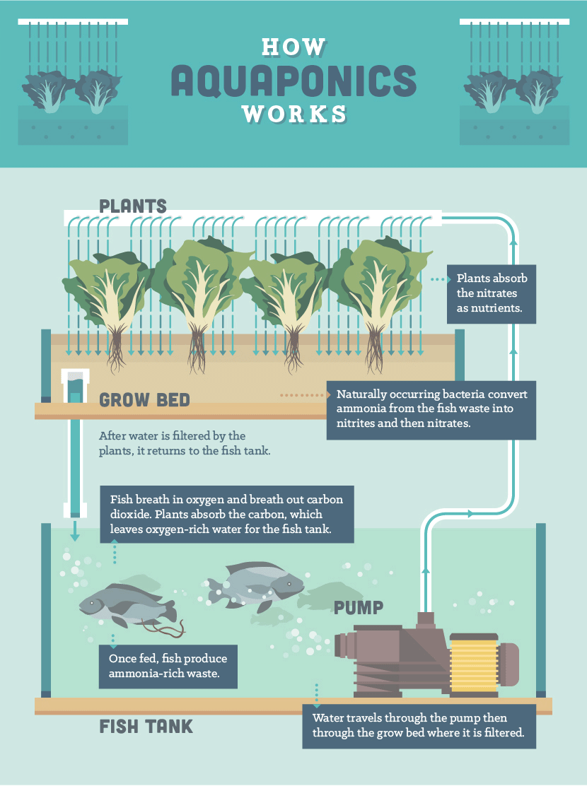 Here's Why You Should Consider AtHome Aquaponics