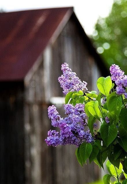 Via Tumbleon Gardening A Creative Journey Beautiful Flowers Lilac Flowers
