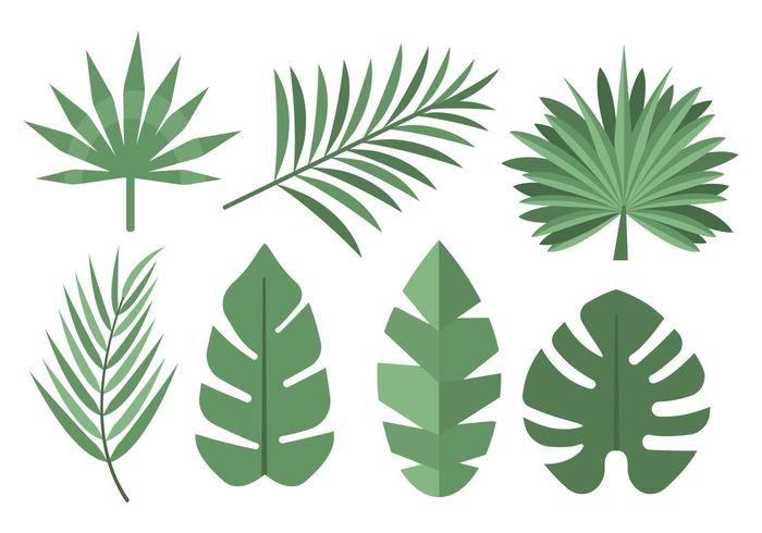 Palmeira Tropical Livre Leaves Vector Inspiration Leaf Template