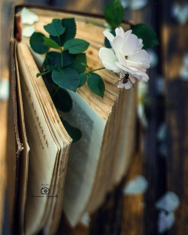 A Girl Inspired Book Flowers Book Photography Book Aesthetic