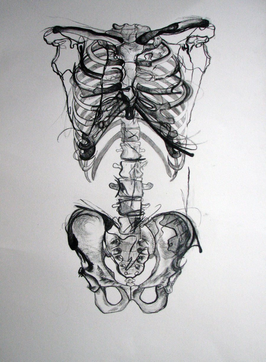 Uncategorized Skeletons Drawings i always loved drawing skeletons in life college pelvis picslist com