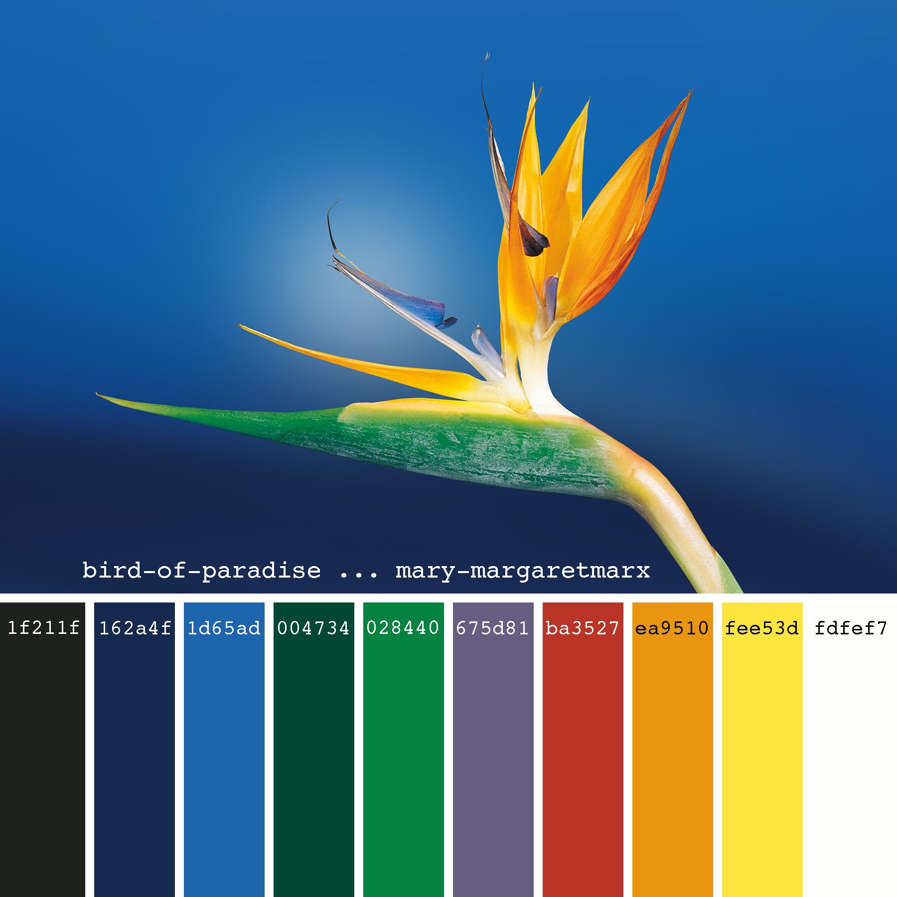 Bird Of Paradise Mary Margaretmarx Color Colors Colour Colours Colorpalette Colorpalettes Colo Ocean Color Palette Color Palette Design Ocean Colors